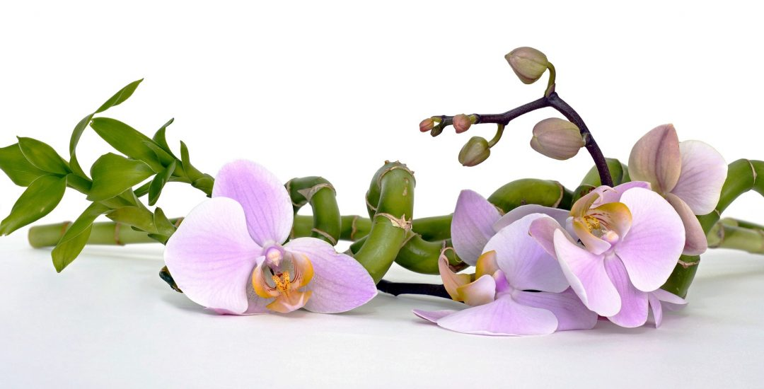 orchid-2115262_1920
